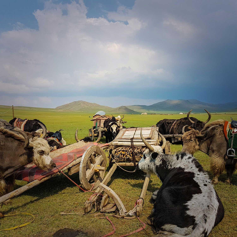 Steppenfuchs Reisen - bei Nomaden