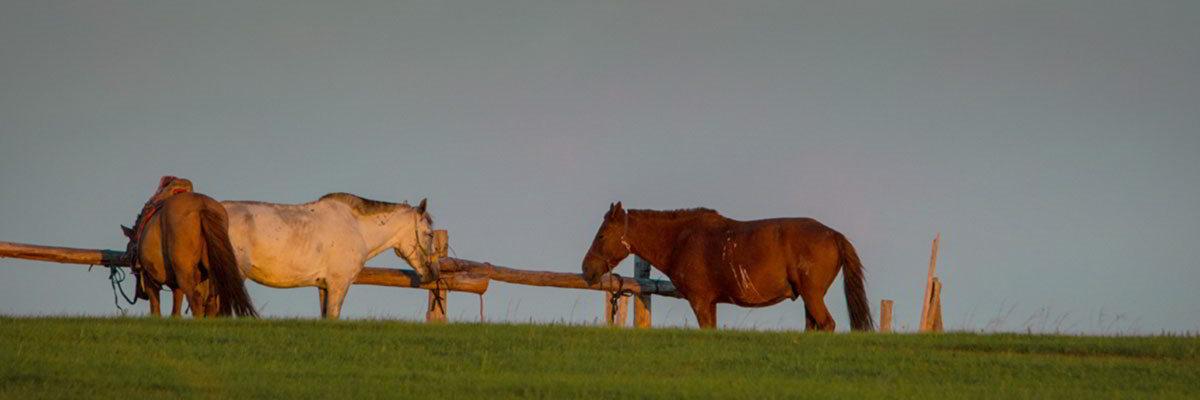 Pferd / Kamel und Wüste