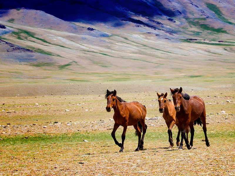 Hustain Nuruu Nationalpark