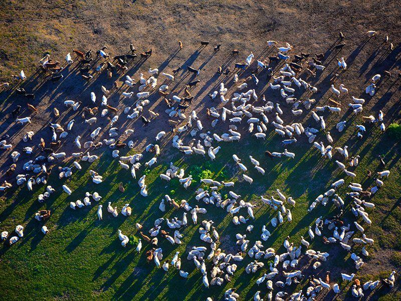 Steppenfuchs Reisen –  Hintergrund – Nutztiere