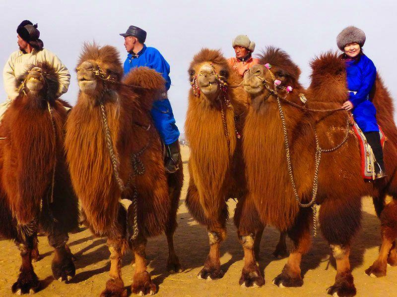 1.000 Camel Festival
